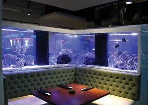 Custom Aquarium Design